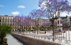 Jacaranda op Plaza de la Merced Malaga