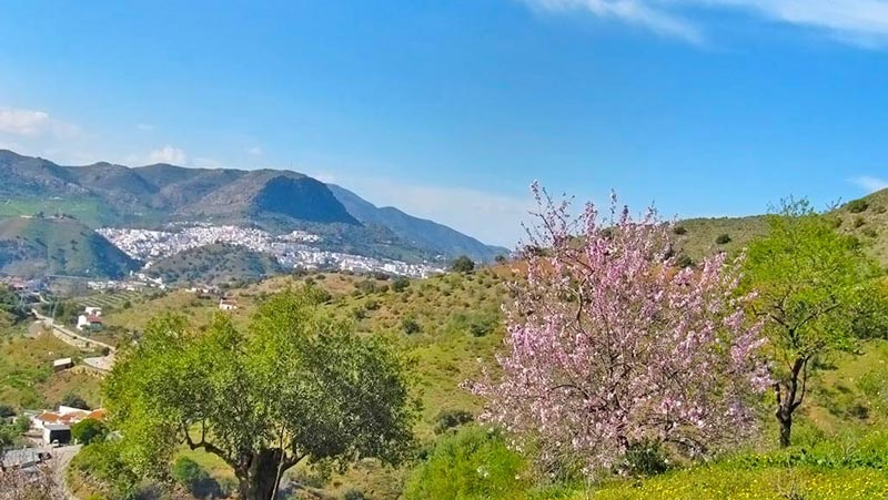 Bed Breakfast omgeving Malaga
