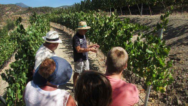 Malaga omgeving - bodega rondleiding en proeverij