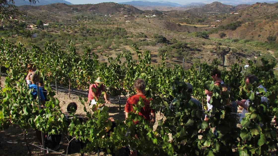 Excursie Malaga - omgeving Malaga