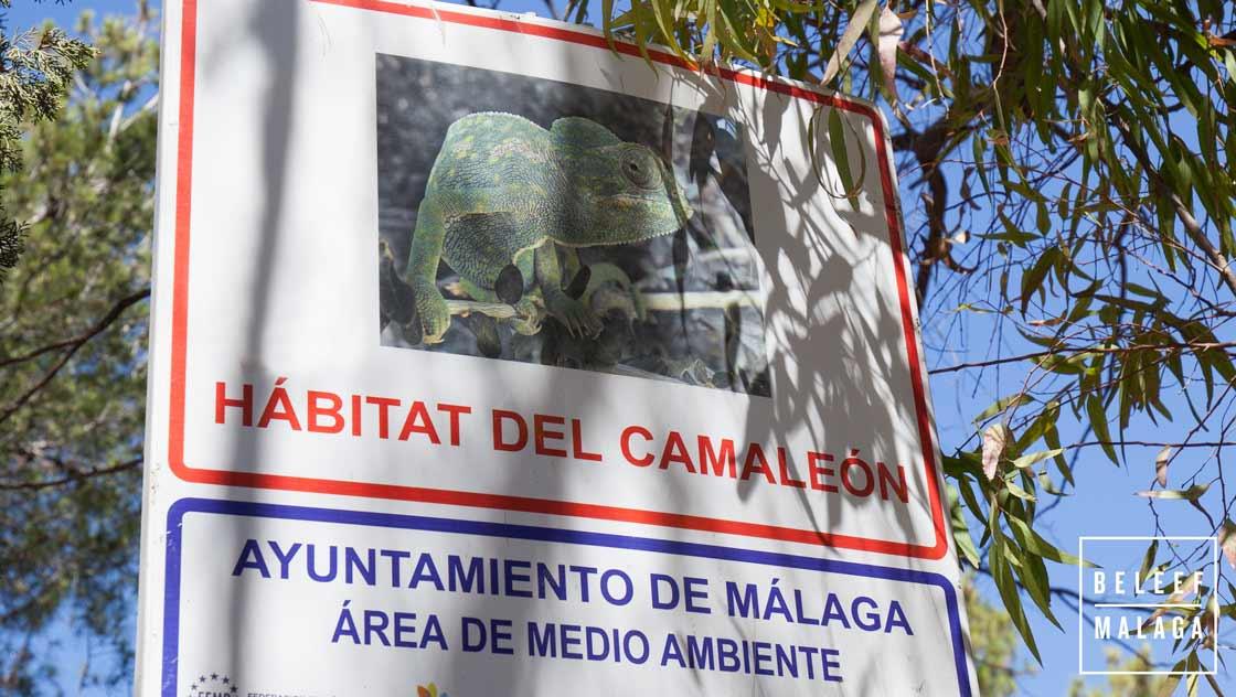 Kameleon Malaga