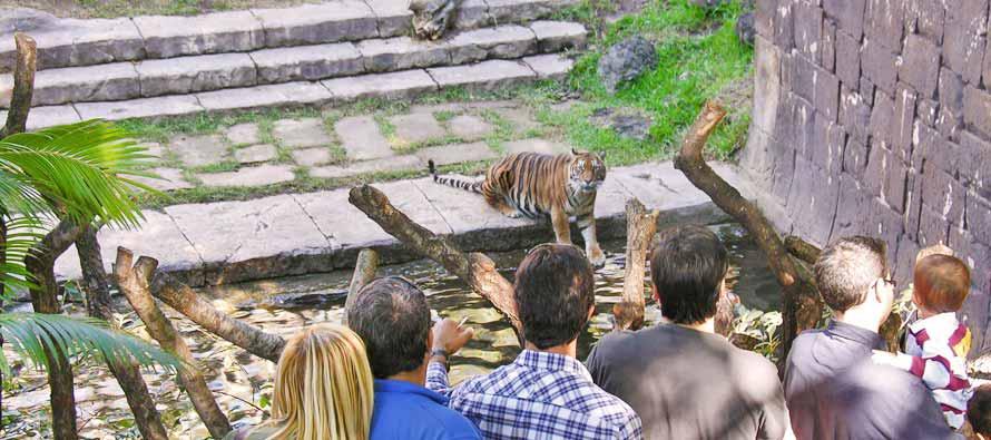 Malaga met kinderen - dierentuin